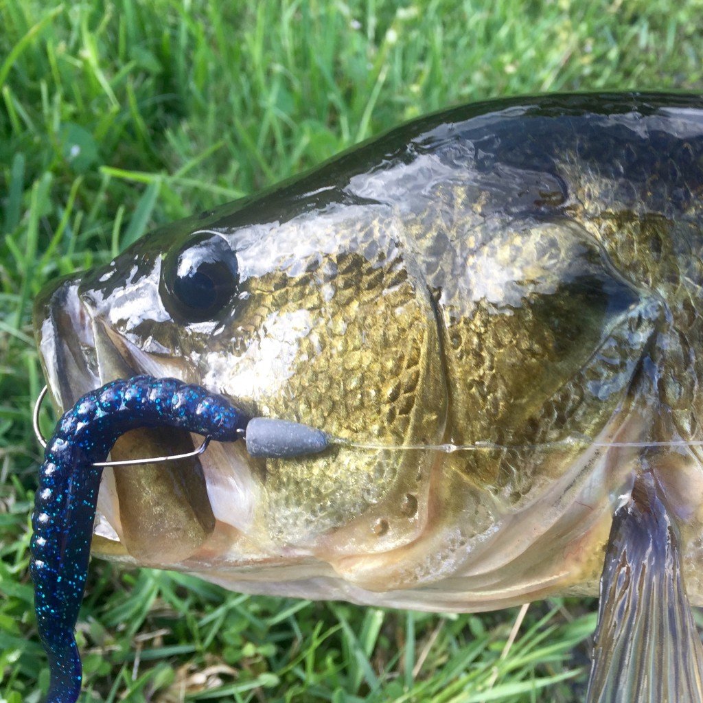 Fall Fishing Tips for Largemouth Bass by Region