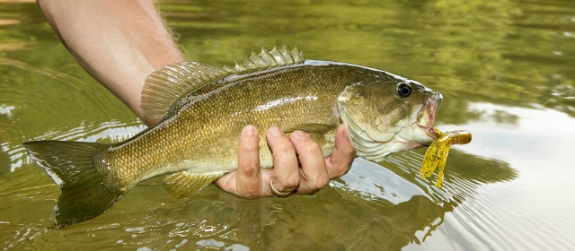 5 Best Places To Fish In Indianapolis For Smallmouth Bass