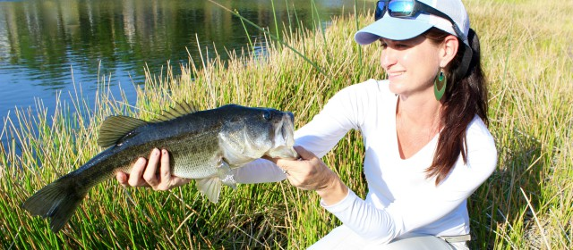 Bass fishing for beginners tips to get ahead of the pack for Where to buy fishing license near me