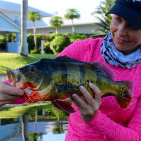Angler with butterfly peacock bass caught while florida fishing