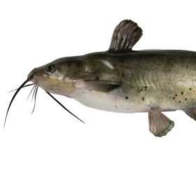 Fishing Tips for How to Catch Catfish