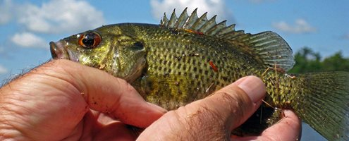 Buy Your Texas Fishing License Online