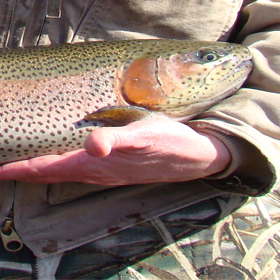 Toccoa River Fly Fishing Tips