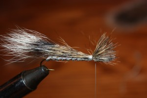 Squirrel Tail 5