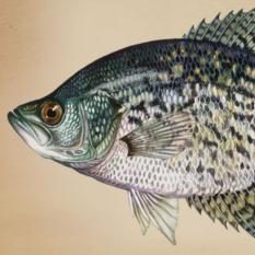 freshwater fish species - take me fishing, Fishing Bait