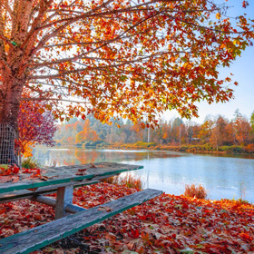 Fall leaves on a lake