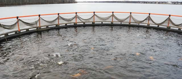 fish hatchery management for conservation