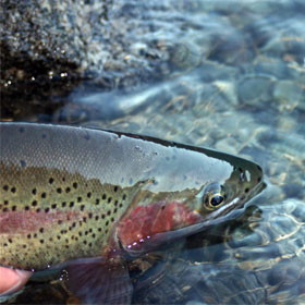 Learn how to catch seatrout