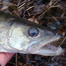 5 Early Spring Fishing Tips