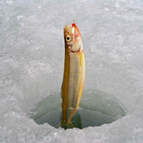 smelt ice fishing tips