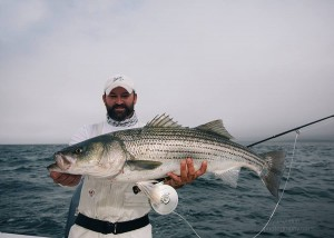 Big-striped-bass-are-on-the-move-in-the-fall....as-Earl-Evans-found-out-300x214.jpg