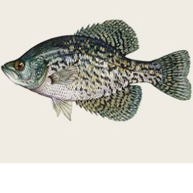 Explore fish Species