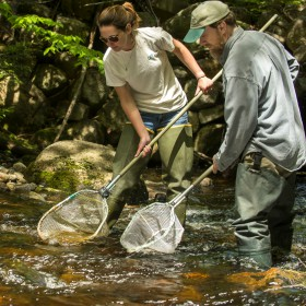 three people using nets in stream for fish habitat restoration
