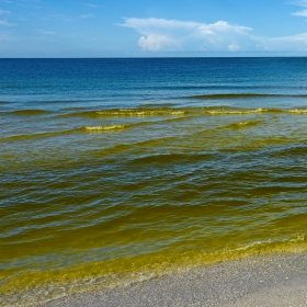 What You Need To Know About Red Tide in Florida