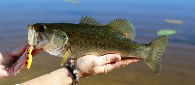 Why These Winter Bass Fishing Lures Work