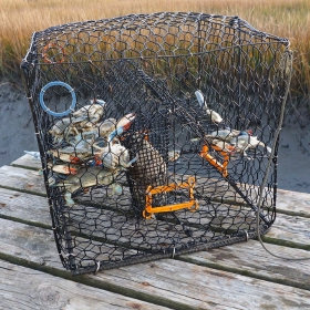 A Primer on Recreational Crabbing and Crab Fishing License Needs