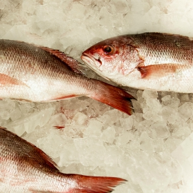3 Factors on Where to Catch Red Snapper