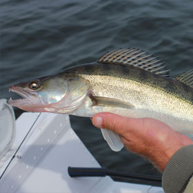 Tips & Info on How to Fish for Walleye