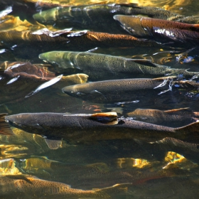 4 Determining Factors for Freshwater Fish Spawning Times