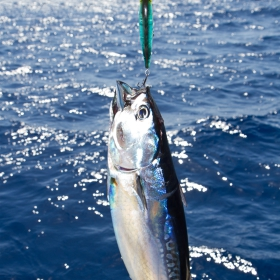 Planning Your Trip for Tuna Fishing in San Diego