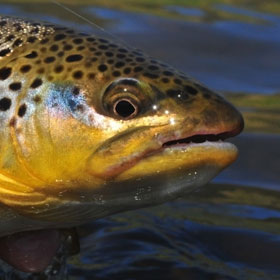 Trout fishing limits in NJ