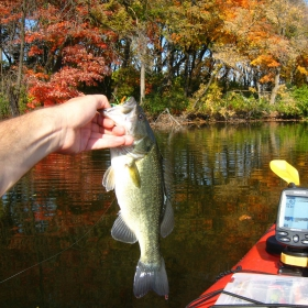 bass fishing in minnesota during fall