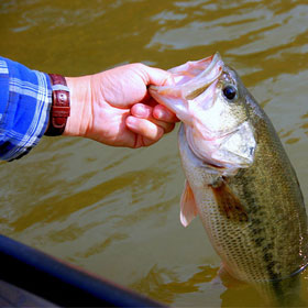 Tips on Best Times to Fish for Bass