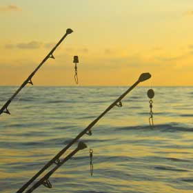 Saltwater Bait and Lures