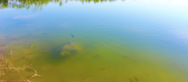 4 determining factors for freshwater fish spawning times for Nc freshwater fishing license