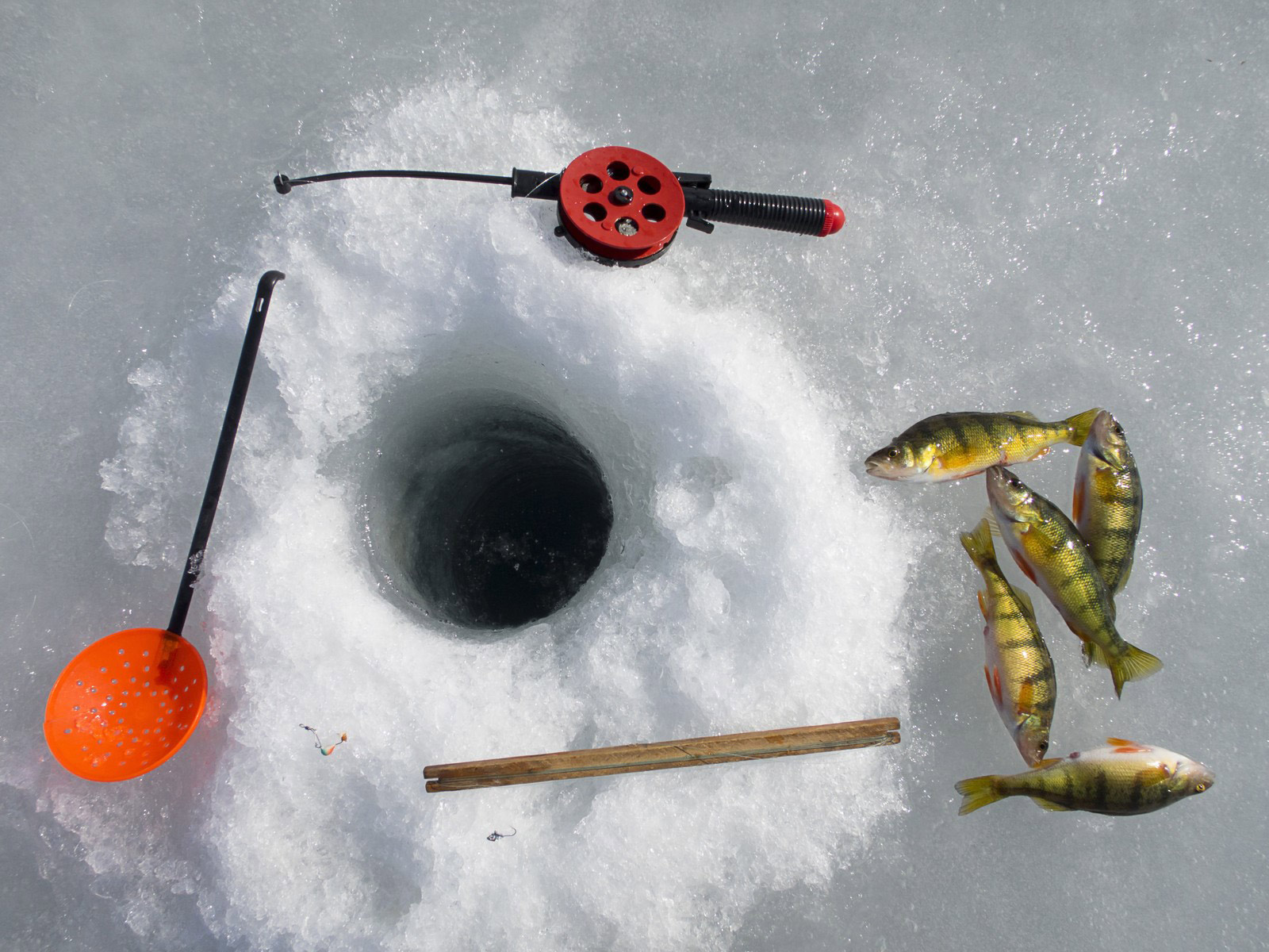 Freshwater fish near me - Ice Fishing