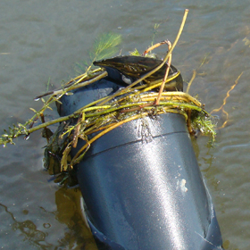 Trolling motor stuck while boating in aquatic vegetation.