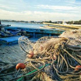 consequences of Illegal Fishing Methods