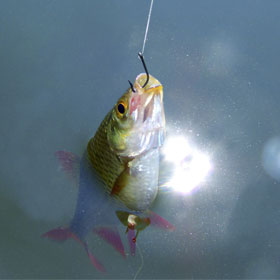Artificial Bait for Fishing: Learn How to Choose