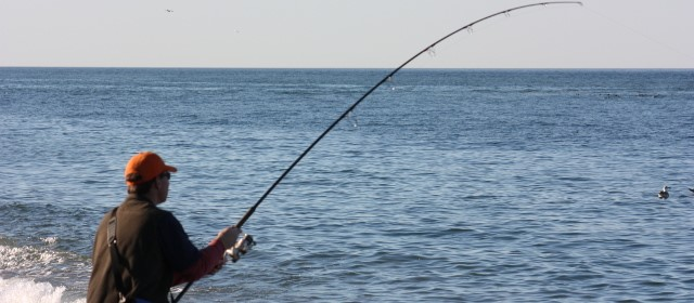 5 surf fishing tips for a thrilling catch - take me fishing, Fishing Bait