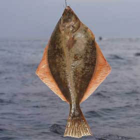 Fluke hanging on a rod with the ocean in the back